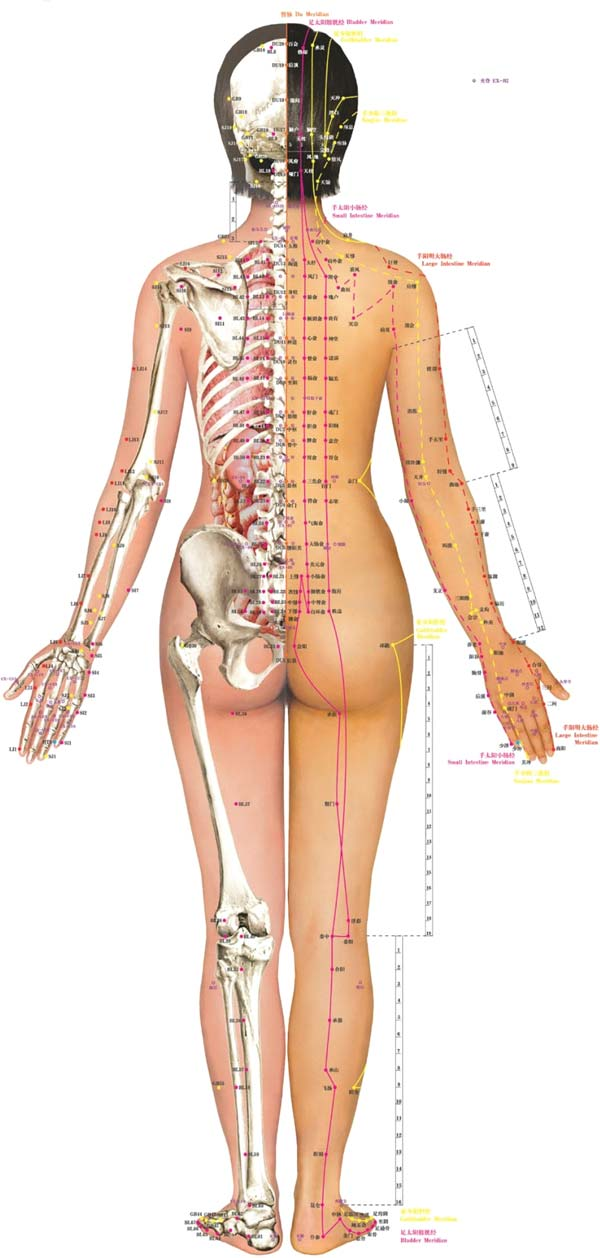 Acupuncture Services at Montvale Health Sport + Spine in NJ